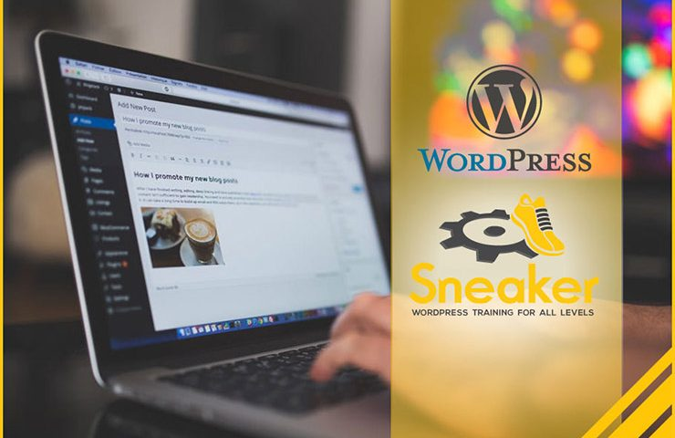 Sneaker Web Design WordPress Training in Houston