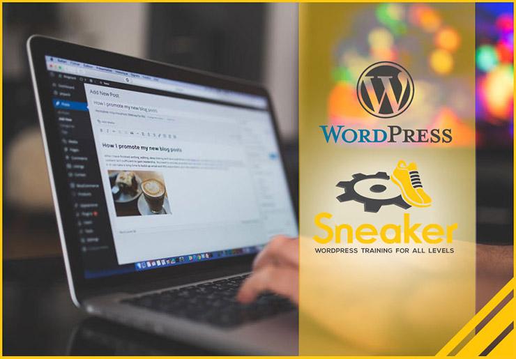 Sneaker Web Design WordPress Training in Houston